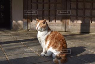 猫,茶色,影,日常,野良猫,ベージュ,日向ぼっこ,日向,ネコ,ミルクティー色