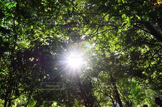 自然,空,森林,屋外,太陽,森,日光,木漏れ日,光,樹木,明るい,草木,日