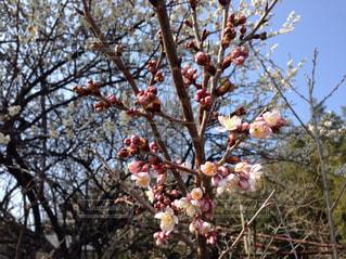 木の枝に花の花瓶 - No.846810