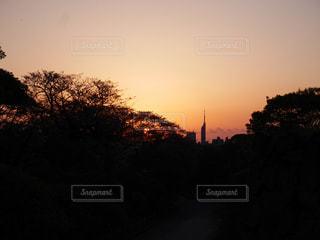 背景の夕日とツリー - No.851254