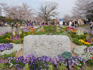 花,春,桜,カラフル,福岡,舞鶴公園