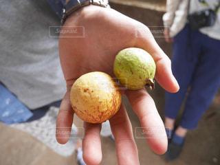 フルーツ,東南アジア,グァバ