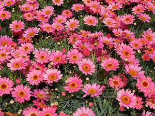 春の訪れの写真・画像素材[1126554]
