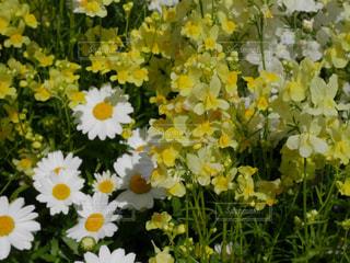 春の訪れの写真・画像素材[1126558]