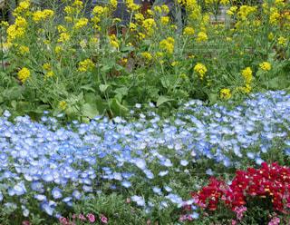 春の訪れの写真・画像素材[1126561]