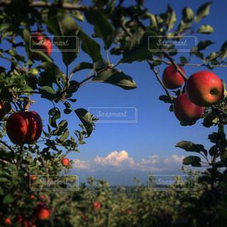 食べ物の写真・画像素材[837117]