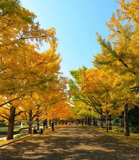 公園の木の写真・画像素材[863848]