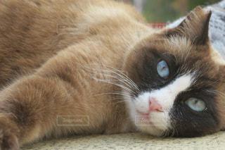 青い瞳の写真・画像素材[1005785]