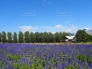 背景の木と大規模なグリーン フィールドの写真・画像素材[1053442]