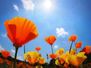 空高く咲こう!の写真・画像素材[1101904]