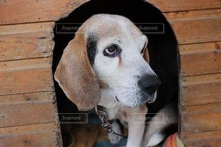 愛犬の写真・画像素材[978323]