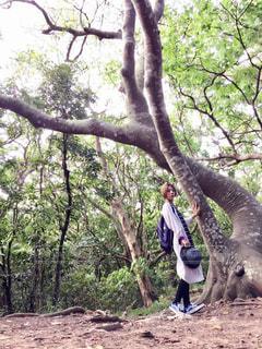 自然,森林,木,屋外,沖縄,樹木,人物,神秘