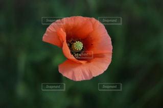 花を持っている手の写真・画像素材[1200367]