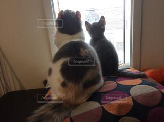 窓の前に座っている猫の写真・画像素材[2987410]