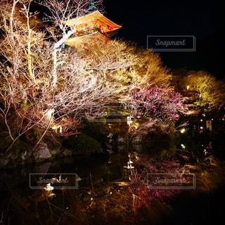清水寺の桜ライトアップの写真・画像素材[911126]