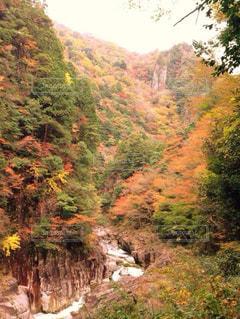 紅葉と川の写真・画像素材[844313]