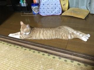 猫,室内,リラックス,のんびり,胴長