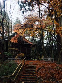 背景の木と家の写真・画像素材[892200]