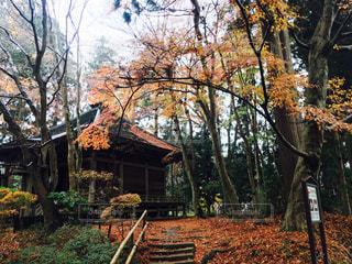 木の前にあるベンチの写真・画像素材[892202]