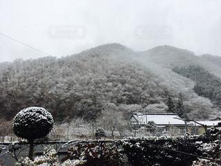 雪に覆われたフィールドの写真・画像素材[892207]