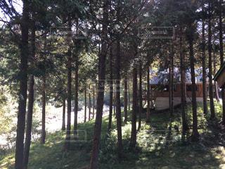 自然,秋,BBQ,長野県,コテージ,10月,平谷湖