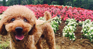 クローズ アップ庭園の犬のの写真・画像素材[879676]