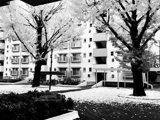 街路樹の写真・画像素材[843964]