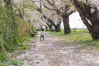 木の隣に立っている人の写真・画像素材[2176832]