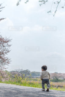 桜並木を歩くの写真・画像素材[2176846]
