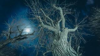 風景,夜,アート,満月,草木,スリーピーホロウ