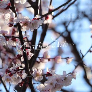 花,春,梅,手書き