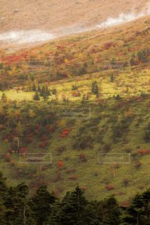 背景の木と大規模なグリーン フィールドの写真・画像素材[855969]