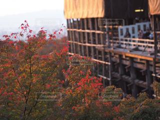 夕暮れの清水寺🍁の写真・画像素材[870386]