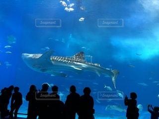 沖縄美ら海水族館の写真・画像素材[1017837]