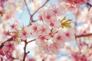 植物にピンクの花 - No.843451
