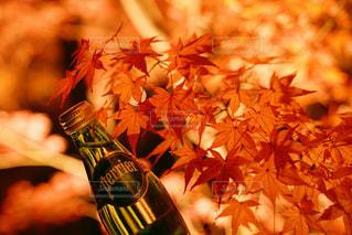 秋の主役 - No.899170