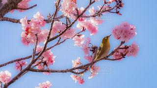 木の枝にピンク色の花のグループ - No.1143305