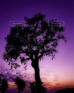 背景の夕日とツリーの写真・画像素材[1269915]