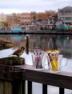 木製テーブルの上に座っている鳥の写真・画像素材[1290082]