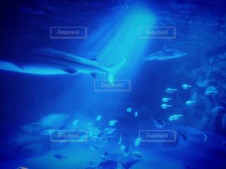 水面下を泳ぐ魚たちの写真・画像素材[1312523]