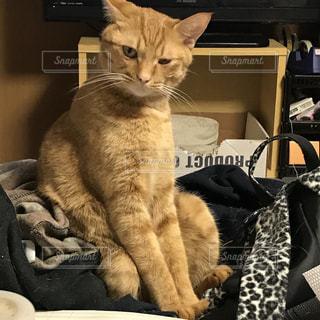 椅子に座って猫の写真・画像素材[1000175]