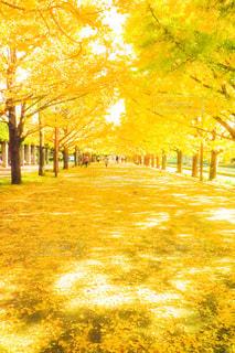 公園の木の写真・画像素材[853008]