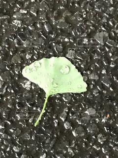 自然,雨,雫,梅雨,宝石,天気,雨の日,銀杏の葉