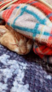 猫,冬,毛布,寒い