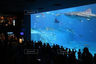 水の中の魚の群れの写真・画像素材[1043999]