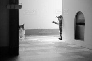 二匹の猫の写真・画像素材[847237]