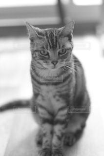 見つめる猫の写真・画像素材[847238]