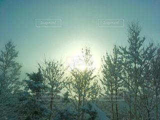 北海道の冬景色の写真・画像素材[910278]