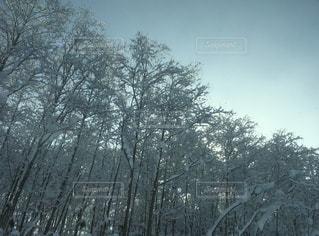 近くの木のアップの写真・画像素材[912440]