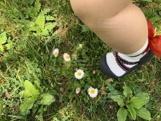 お散歩の写真・画像素材[2281313]